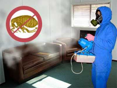 Как вывести блох в домашних условиях