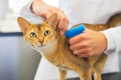 Покупка высококачественных чипов для кошек